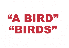 """What does """"A Bird"""" and """"Birds"""" mean in rap?"""