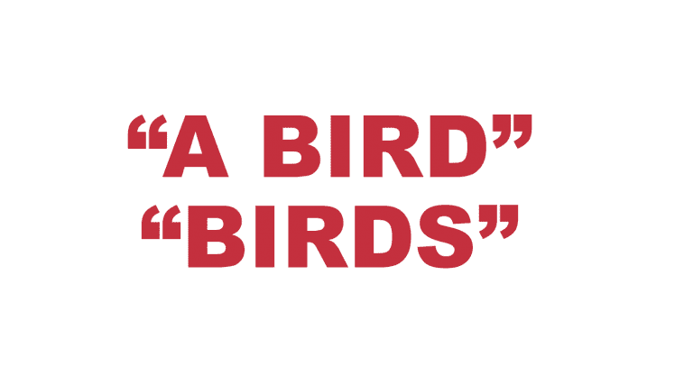 "What does ""A Bird"" and ""Birds"" mean in rap?"